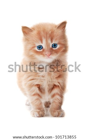 ginger kitty with blue eyes isolated on a white background - stock photo