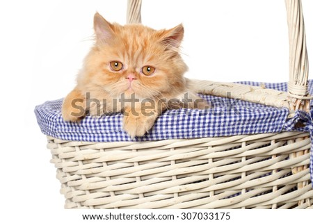 Ginger Persian cat in wicker basket isolated on white background