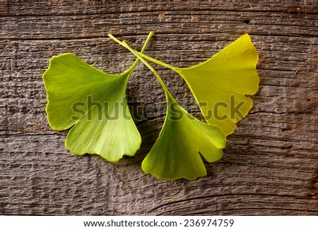 Gingko biloba fresh leaves on wooden board - stock photo