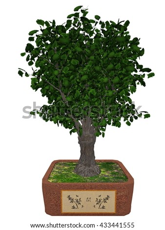 Gingko biloba tree bonsai - 3D render