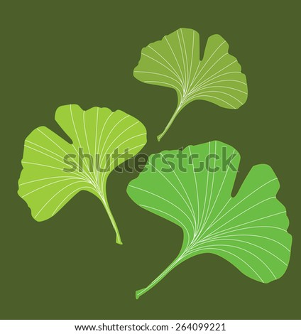 Ginkgo - stock photo