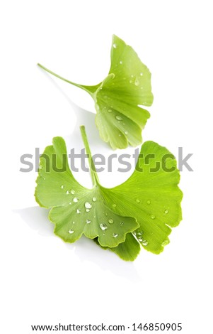 Ginkgo biloba leaf with water drops isolated on white background with reflection. Alternative medicine concept. - stock photo
