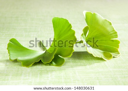 Ginkgo leaf isolated on green background. Natural food supplement. Healthy lifestyle.  - stock photo