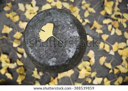 Ginkgo leaf on the floor - stock photo