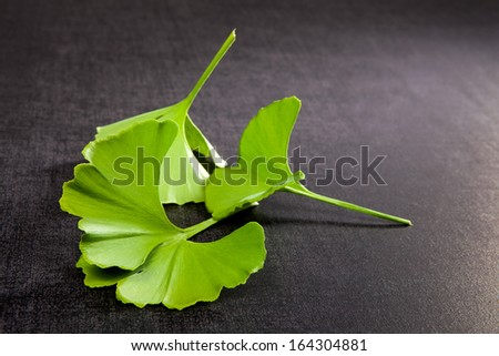 Ginkgo leaves isolated on black background. Alternative medicine, traditional natural healing. - stock photo