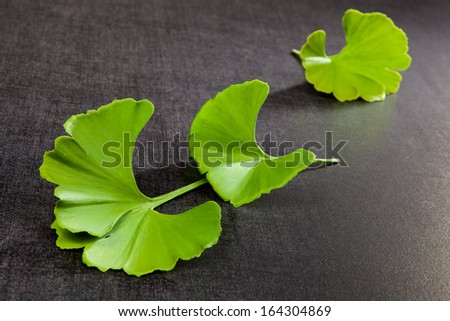 Ginkgo leaves on black background. Natural healing.  - stock photo