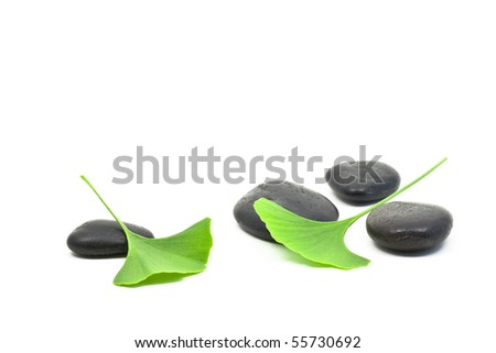 Ginkgo leaves on black pebbles over white background