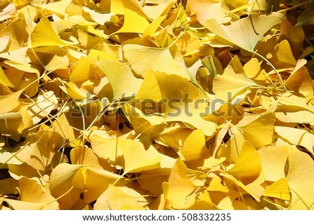 Ginkgo leaves on the floor