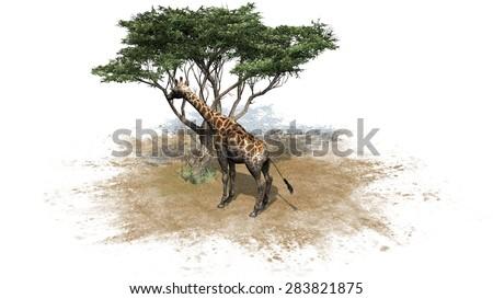 Giraffe an einem baum isolated on white background - stock photo
