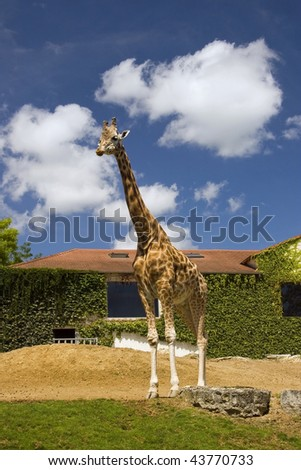 Giraffe at the zoo against blue sky