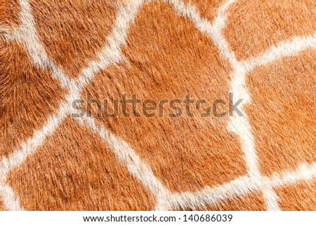 Giraffe fur textures - stock photo