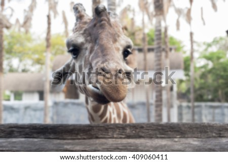 Giraffe in the zoo,blur focus.  - stock photo
