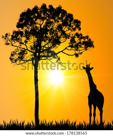 giraffe on grass with big tree and sunset