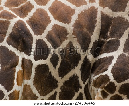 Giraffe pattern - stock photo