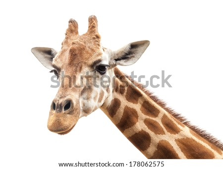 Giraffe's head at the zoo against the white background of an overcast sky