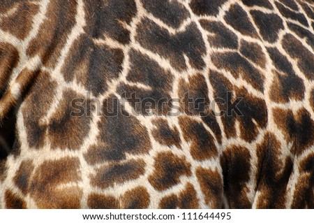 giraffe skin background texture