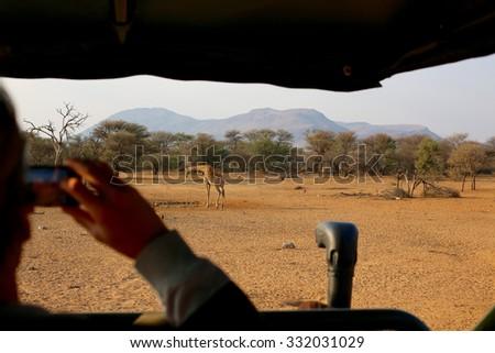 Giraffe through Cellphone View - stock photo