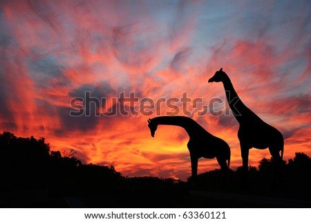 Giraffes Against A Spectacular Serengeti Sunset - stock photo