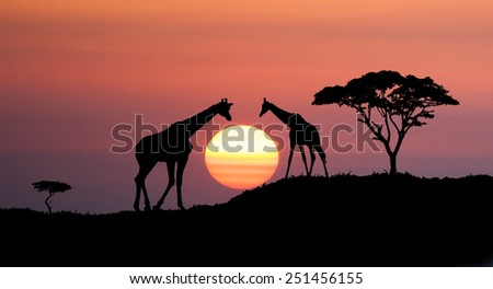 Giraffes and africans tree at sunset, abstract african illustration landscape with big sun over the horizon  - stock photo