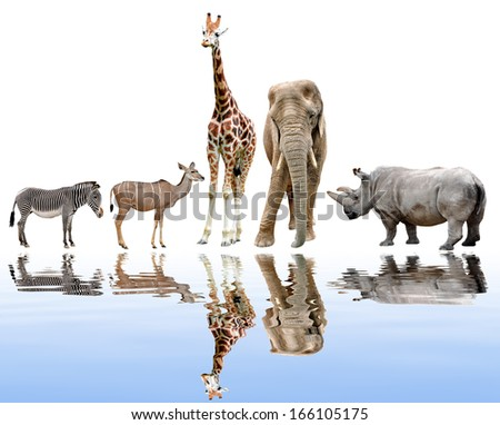 giraffes,elephant,rhino,kudu and zebra  - stock photo