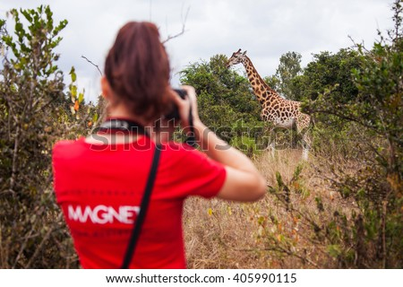 Giraffes in the AFEW Giraffe Centre, Nairobi, Kenya - stock photo