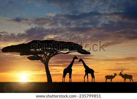 Giraffes with Kudu at sunset  - stock photo