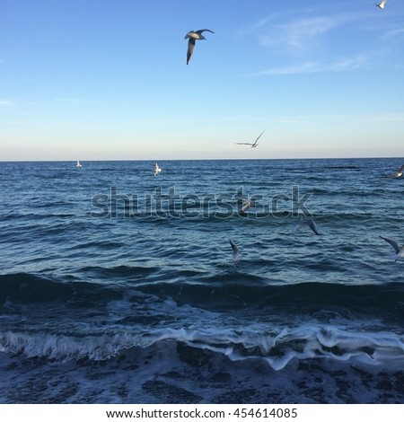 Girl and birds at the sea
