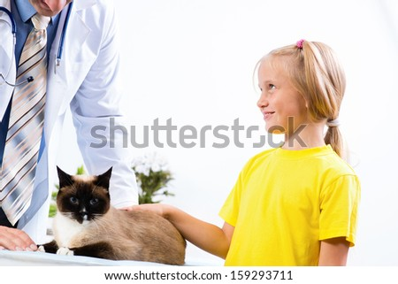 girl brought the cat to the veterinarian, the veterinarian examines a cat - stock photo