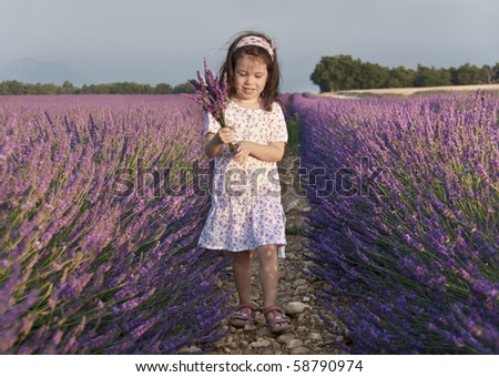 Girl collecting flowers in a lavender field - stock photo
