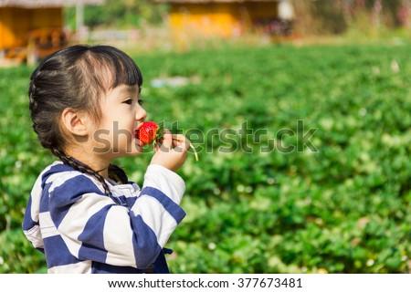 Girl eating strawberries at organic farm ,Chiang Mai, Thailand. - stock photo