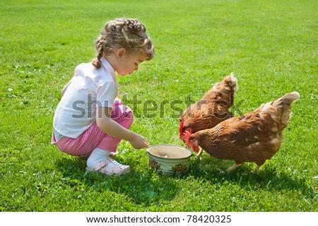 Girl feeding chickens - stock photo