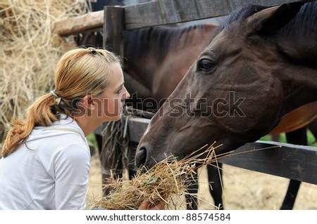 girl feeding horses in the farm - stock photo