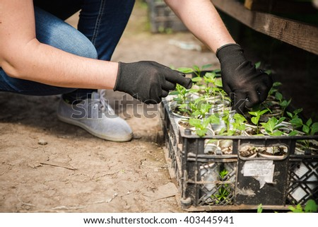 girl, greenhouse, seedlings,  seedling vegetables