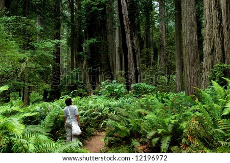 Girl hiking around relict sequoia trees in Redwoods National park, California - stock photo