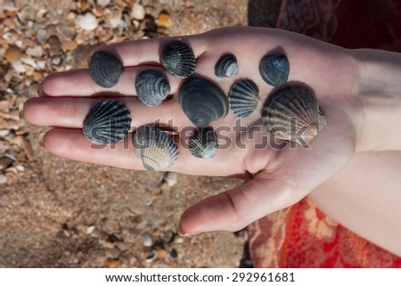 Girl hold a lot of shells on palm