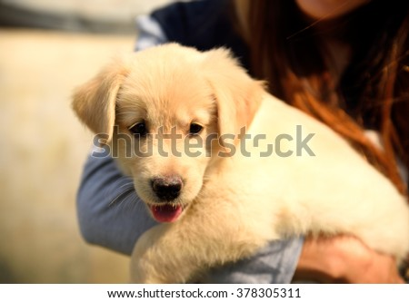 girl holding a Golden Retriever Puppy