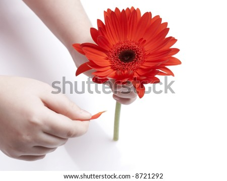girl holding red gerbera and petal, 'loves me, loves me not' game - stock photo