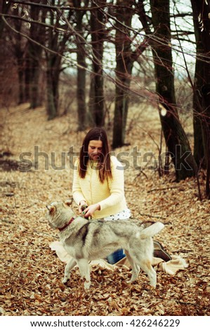 Girl in the park their home with a dog Husky. The girl with the siberian husky. Delightful girl plays with a Siberian Husky. Girl walking with a hunting dog - the West Siberian husky. Close-up. 