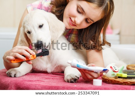 Girl owner is cleaning teeth of retriever puppy after shower