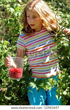 girl picking berries in the summer - stock photo