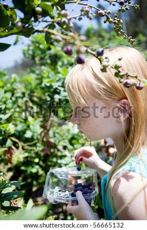 Girl picking blueberries - stock photo
