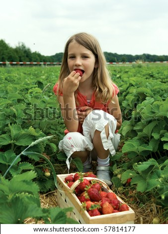 Girl picking strawberry in a field. - stock photo