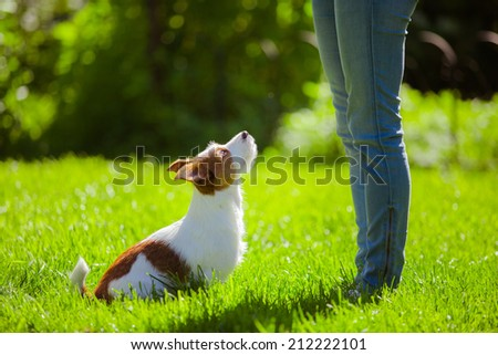 Girl playing with a dog on the nature - stock photo