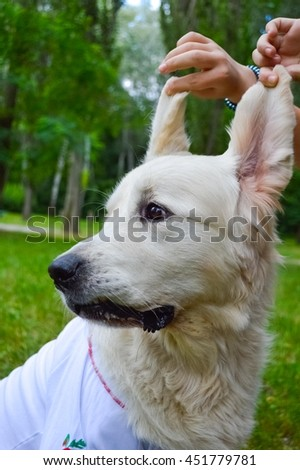 girl playing with her dog golden retriever