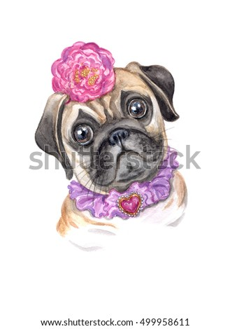 Girl Pug. Beautifully dressed pug. Watercolor drawing of a dog.