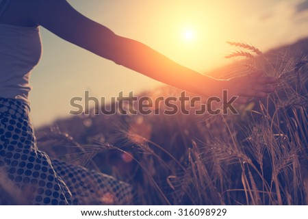 Girl's hand touching wheat spikes at sunset in the evening (intentional sun glare, lens focus on hand) - stock photo