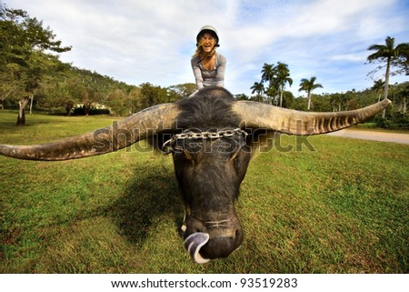 Girl sits on a large animal yak - stock photo