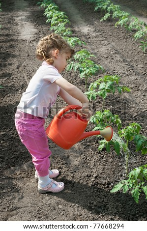 girl watering  Seedling Tomato in  greenhouse - stock photo