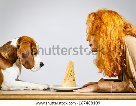 girl with cute beagle and  cheese on a white plate - stock photo