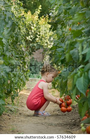 girls picked tomatoes